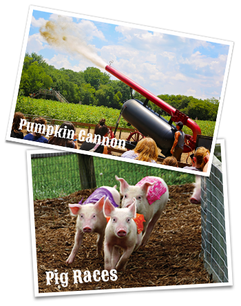 Pig Races and Monster Pumpkin Cannon at Copper Creek Farms